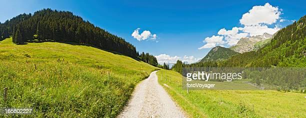 Route de campagne idyllique Pâturage d'été vert forêt en montagne panorama