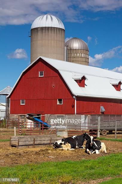 Idyllic Dairy Farm, Red Barn with Happy Cows