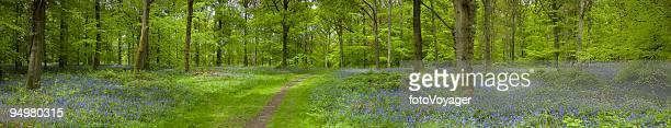 Idyllic forest trail