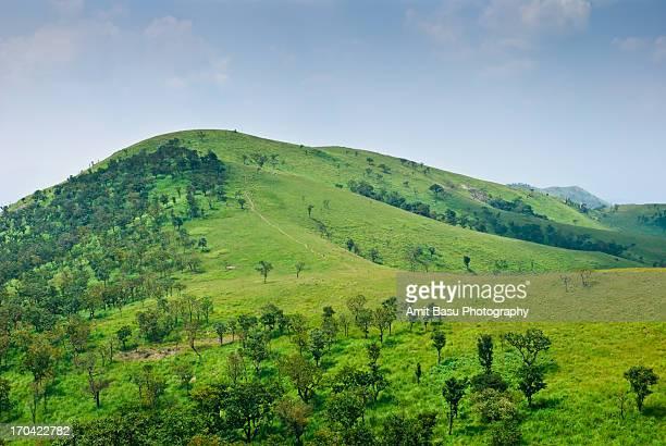 Idyllic green hills, Bandipur, India