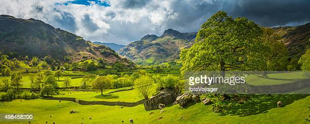 idyllic green pasture sheep flock rugged mountain valley lake district - lake district stockfoto's en -beelden