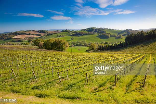 idyllic italian landscape - emilia romagna stock photos and pictures