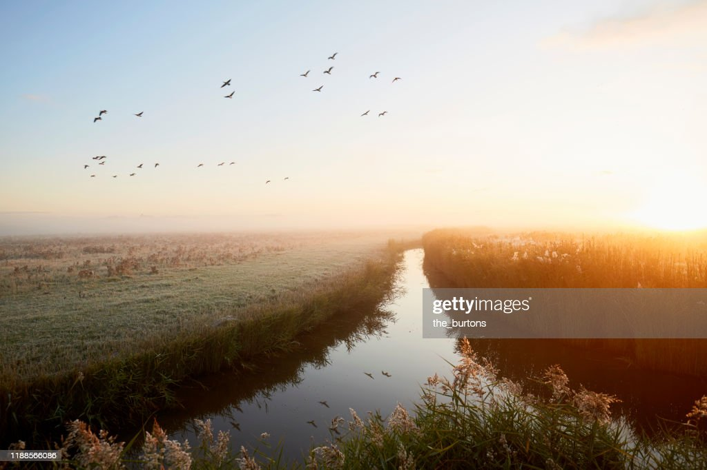 Idyllic landscape and flying geese at sunrise, rural scene : Stock-Foto