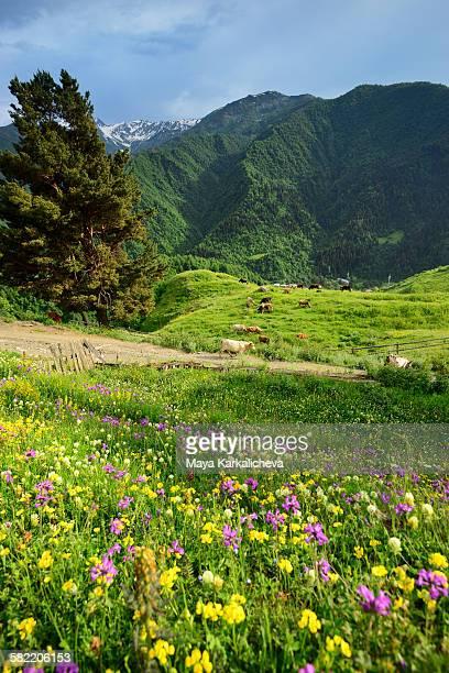 idyllic landscape from svaneti, caucasus mountain - georgië zuidelijke kaukasus stockfoto's en -beelden