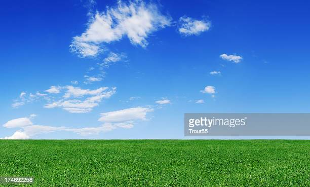 Idyllic landscape - Green field and the blue sky