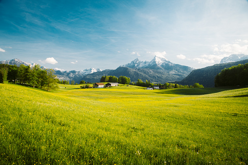 Idyllic landscape in the Alps with blooming meadows in springtime 1154783597