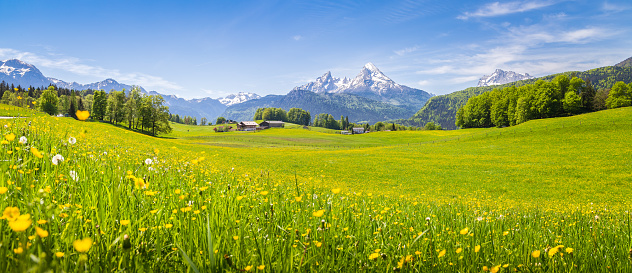 Idyllic landscape in the Alps with blooming meadows in summer 663913080
