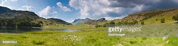 Idyllische mountain meadow
