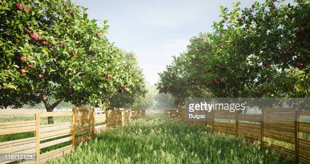 idyllic orchard - fruit tree stock pictures, royalty-free photos & images