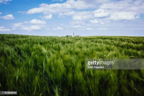 idyllic, rural green wheat crop and landscape, brandenburg, germany - 生い茂る ストックフォトと画像