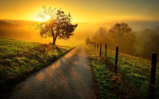 Idyllic rural landscape in golden light 614507060