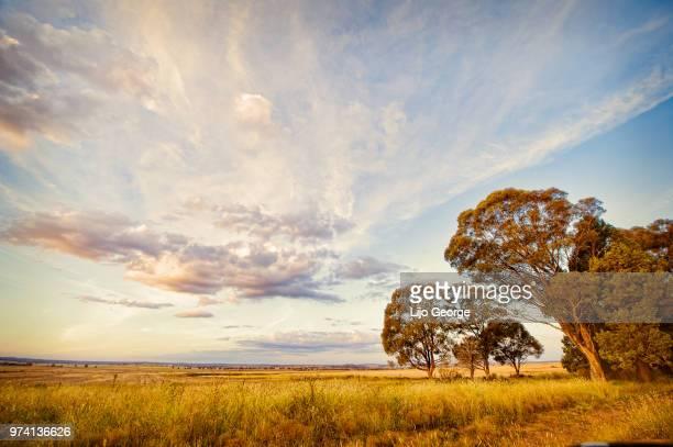 idyllic scene, dubbo, australia - rural scene stock pictures, royalty-free photos & images