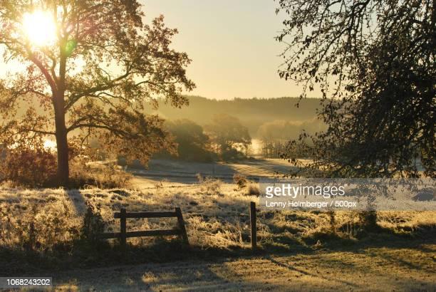 idyllic sepia tone rural landscape - sepiakleurig stockfoto's en -beelden