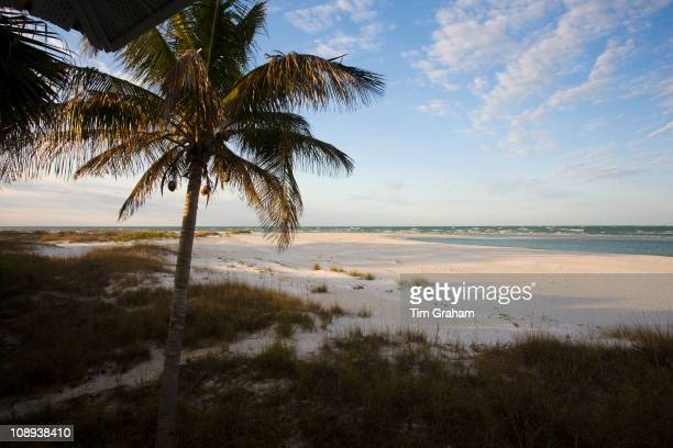 Idyllic shoreline and sandy beach scene with palm trees at Anna Maria Island Florida United States of America