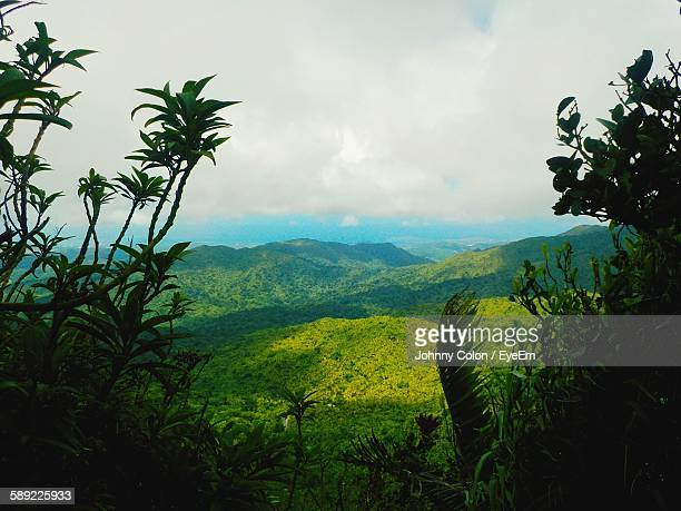 idyllic shot of green landscape against sky - puerto rico stock pictures, royalty-free photos & images
