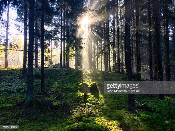 Idyllic Shot Of Sunlight In Forest