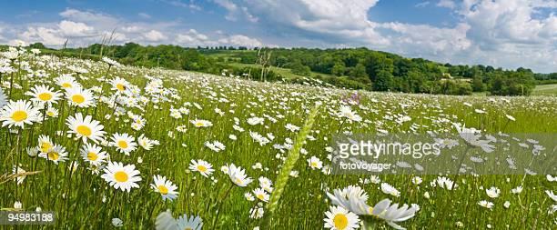Idyllic summer meadow panorama