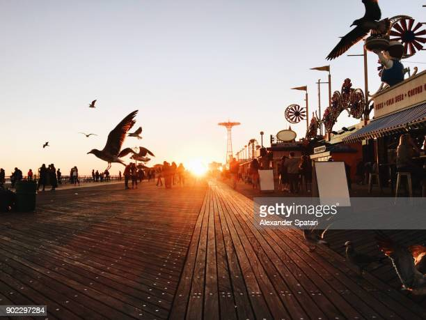 idyllic sunset with flying birds at coney island, brooklyn, new york city, usa - boardwalk stock pictures, royalty-free photos & images