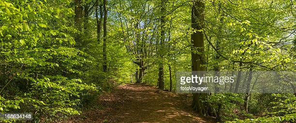 Idyllic trail through vibrant green summer forest foliage panorama