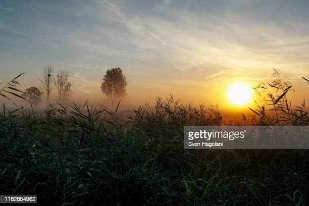 idyllic, tranquil sunrise and fog over rural field, leopoldshagen, mecklenburg-vorpommern, germany - mecklenburg vorpommern stock pictures, royalty-free photos & images