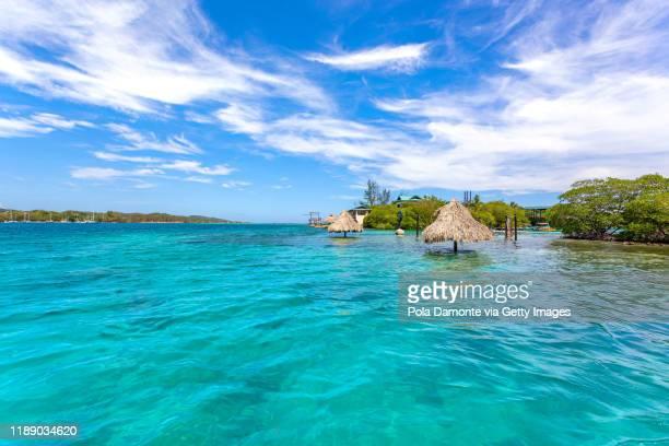 idyllic transparent water beach in the caribbean sea in a sunny day, roatan. - honduras fotografías e imágenes de stock
