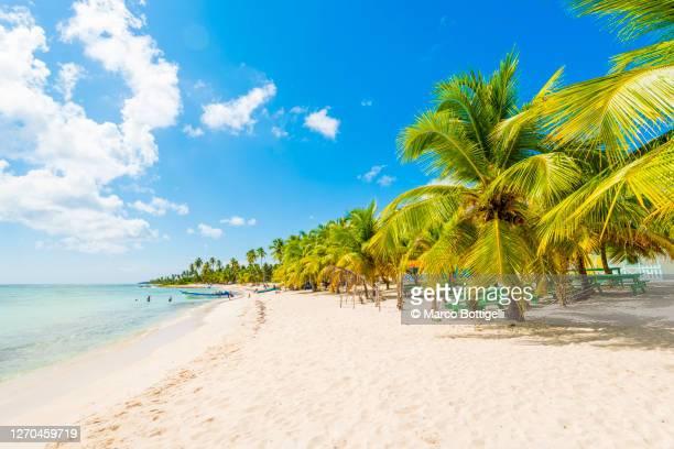 idyllic tropical beach in saona island, dominican republic - paisajes de republica dominicana fotografías e imágenes de stock