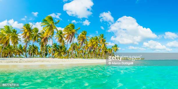 idyllic tropical beach on the caribbean sea. - paisaje espectacular fotografías e imágenes de stock