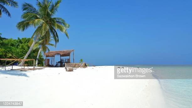 idyllic tropical peaceful paradise sandy beach with palm tree on exotic island - lagon photos et images de collection