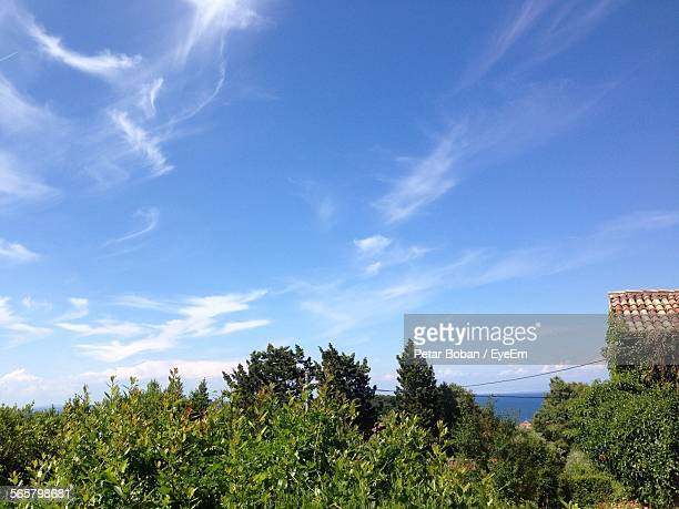 idyllic view of bush against cloudy sky - boban stock pictures, royalty-free photos & images