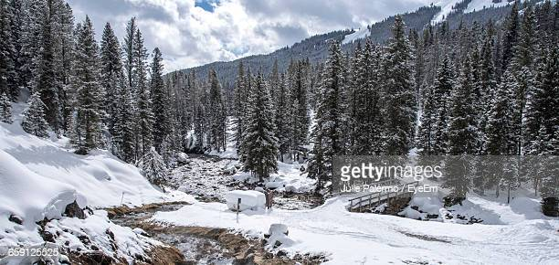 Idyllic View Of Evergreen Trees On Snow Landscape
