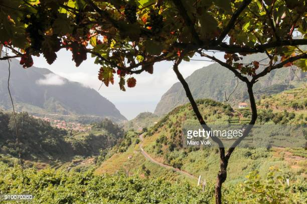 idyllic view of green landscape and mountains, sao vicente, madeira, portugal - madeira stockfoto's en -beelden