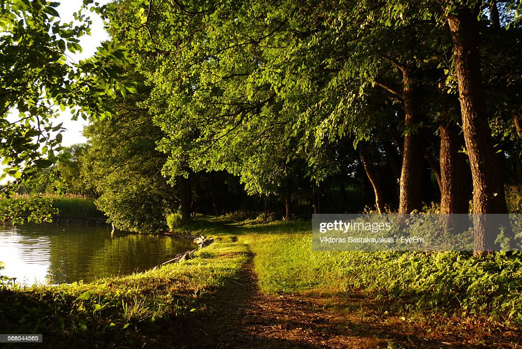 Idyllic View Of Pond And Trees : Stock Photo