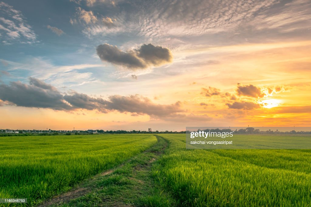 Idyllic View of Rice Fields Against Sky During Sunset,Thailand : Stock Photo