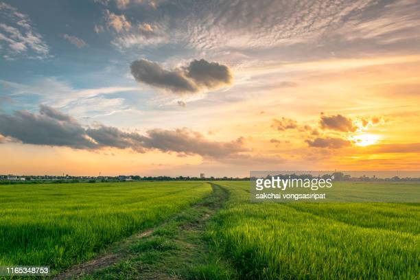 idyllic view of rice fields against sky during sunset,thailand - horizon stockfoto's en -beelden