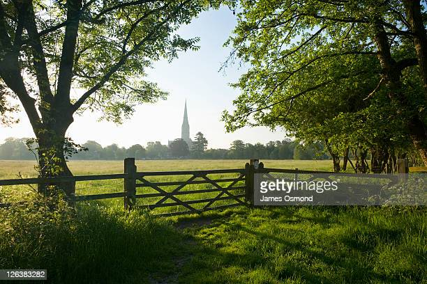 idyllic view of salisbury cathedral spire from across harnham water meadows - church stock pictures, royalty-free photos & images