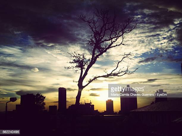 idyllic view of silhouette bare tree amidst buildings against sunset sky at universidad de los andes campus - universidad stock pictures, royalty-free photos & images