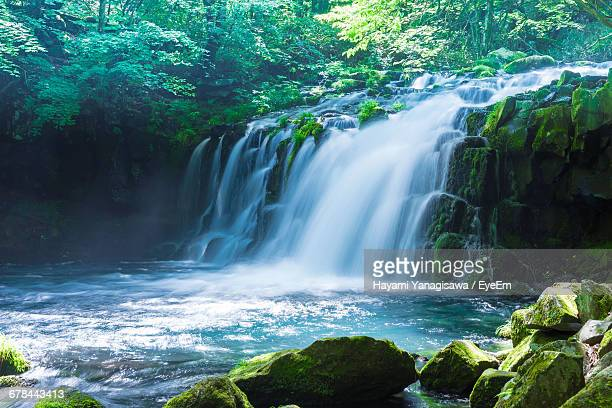 idyllic view of waterfall in forest - 滝 ストックフォトと画像