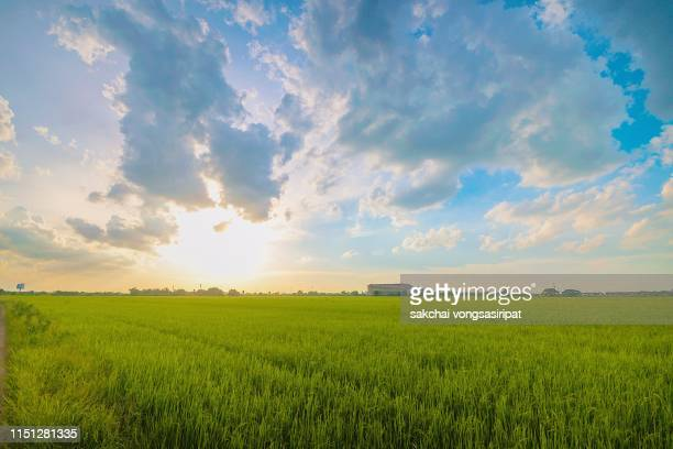 idyllic view sun shining over the field against sky during sunset, thailand - low stock pictures, royalty-free photos & images