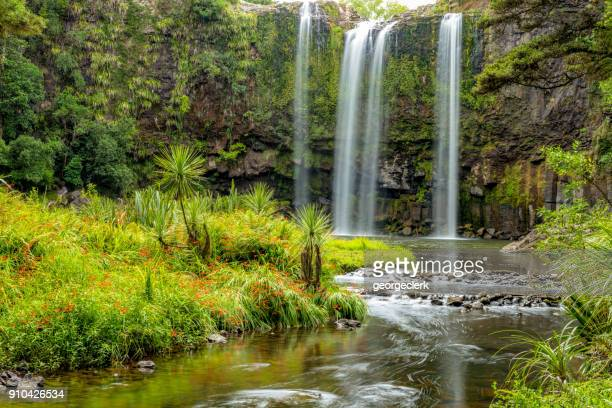 idyllic waterfall - whangarei falls in new zealand - northland new zealand stock pictures, royalty-free photos & images