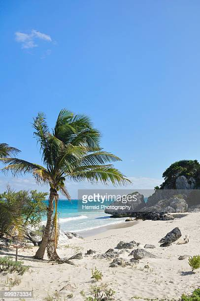Idyllic White Sand Beach with Palm Tree on the Caribbean Sea, Mayan Riveria, Quintana Roo, Mexico