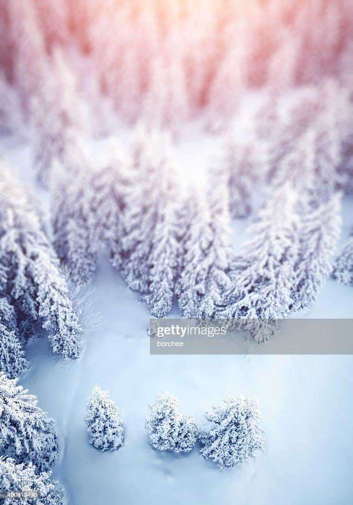 のどかな冬の背景 : ストックフォト