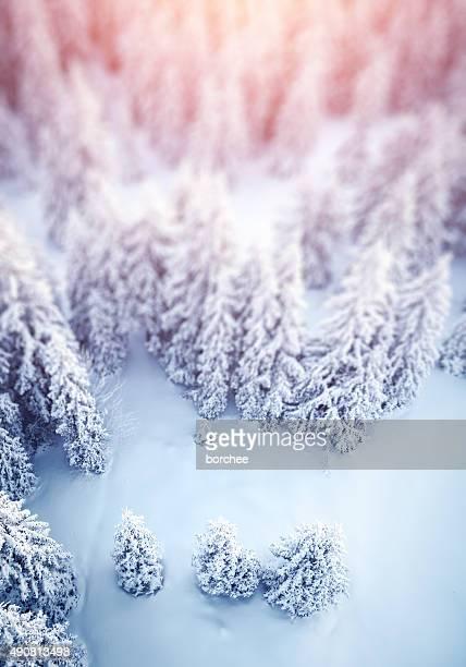 Idyllic Winter Background
