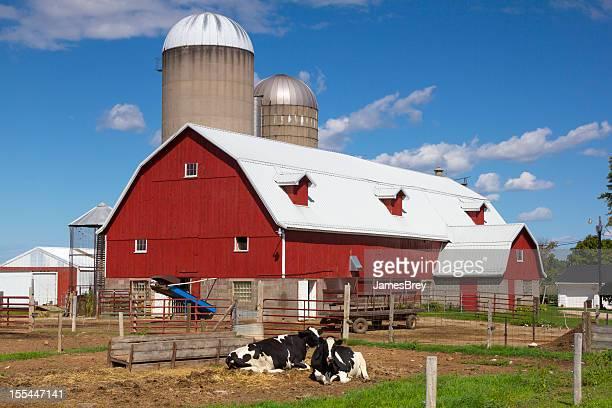 Idyllic Wisconsin Farm, Red Barn, Happy Cows