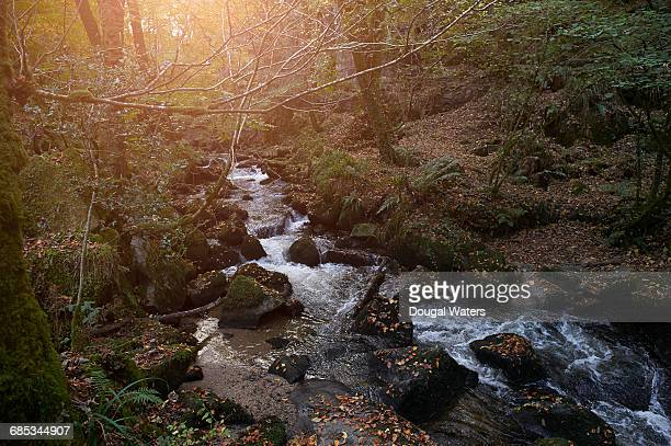 Idyllic woodland stream in Autumn.