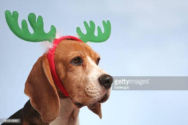 If I were a Reindeer...