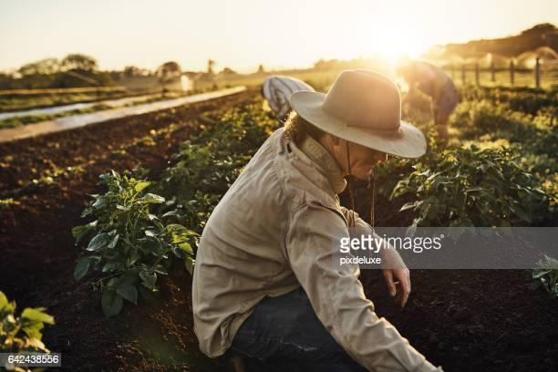 wenn sie heute gegessen, danke bauer - landwirtschaftliche tätigkeit stock-fotos und bilder
