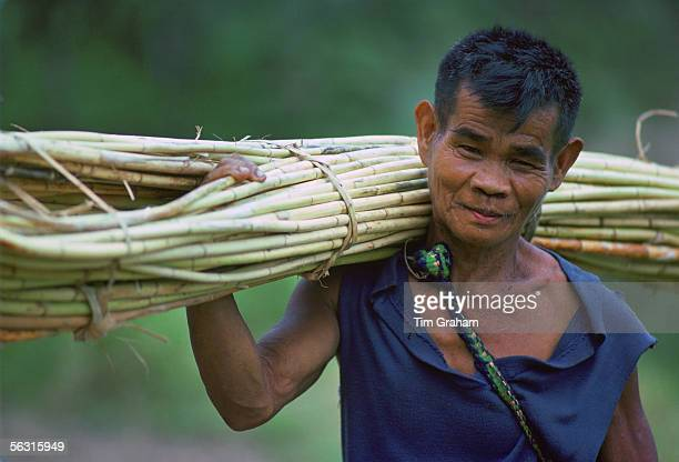 Ifugao man carrying a bundle of Rattan that he has cut from the mountainside Banaue LuzonPhilippines
