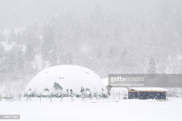 igloo on snow covered field against tree - igloo stock pictures, royalty-free photos & images