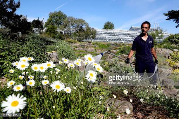 Ignacio Silva, kew diploma Student, maintains the Rock garden during lockdown at The Royal Botanic Gardens at Kew on May 20, 2020 in Richmond,...