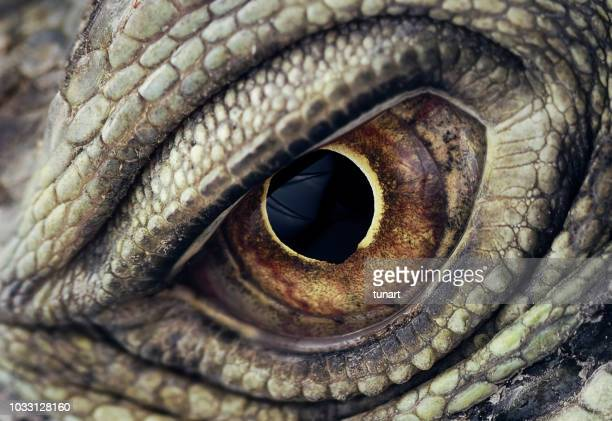 iguana eye closeup - monster fictional character stock pictures, royalty-free photos & images